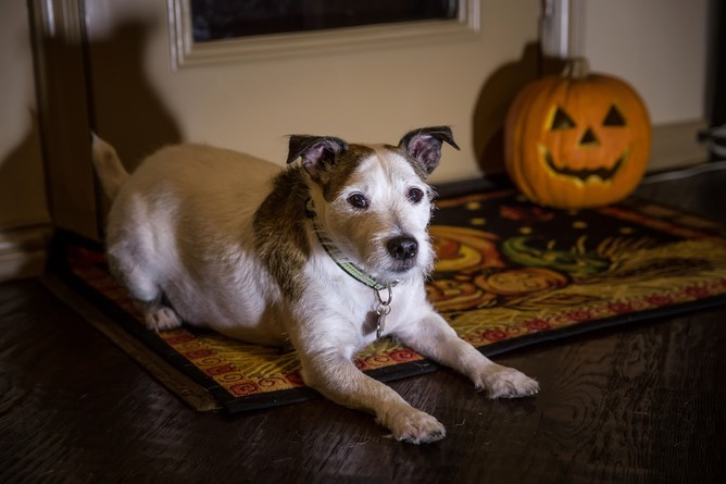 Murphy Waits for Halloween